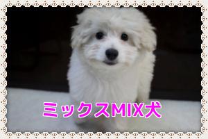 ミックス(ハーフ)犬