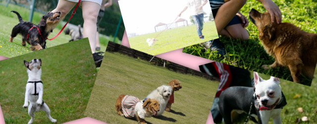 愛犬と楽しむドッグスポーツ