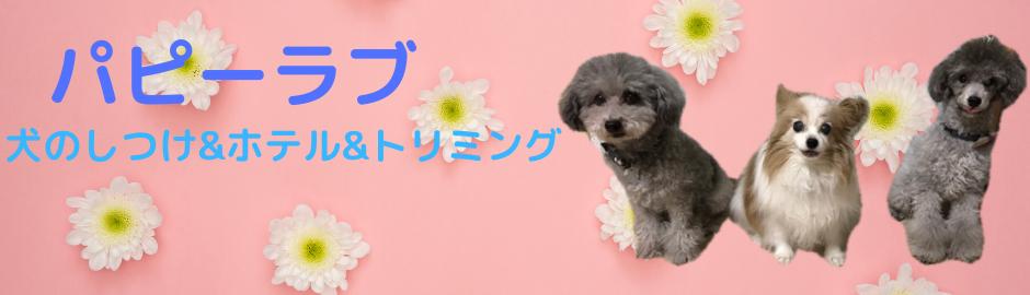 【東京渋谷犬しつけ教室】パピーラブ 人気おすすめの犬の出張トレーニング・ホテル